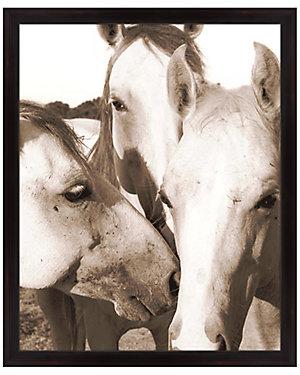 Horse Whispering by Melissa Van Hise