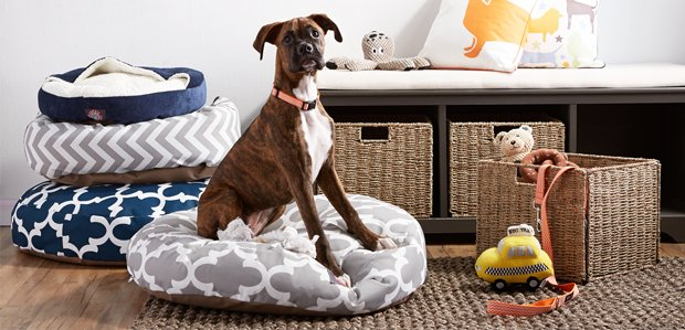 The Pet Shop: Tail-Wagging Beds, Decor, & More