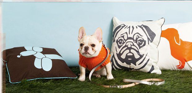 The Pet Shop: Tail-Wagging Beds, Leashes, & More