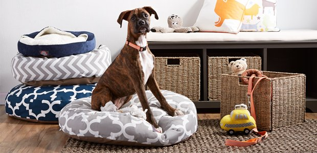 Celebrate National Puppy Day: Doggy Essentials